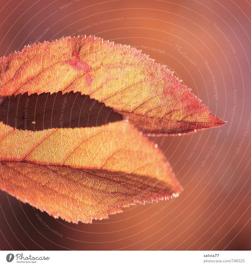 Schattenspiel Natur schön Farbe Pflanze Sommer Baum ruhig Blatt Tier Wald gelb Umwelt Wärme Herbst Frühling natürlich