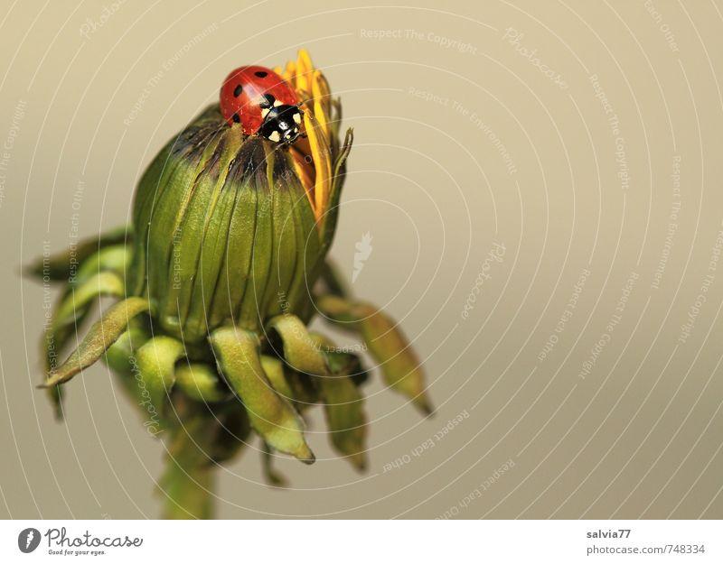 """""""Blüte öffne dich"""" grün Pflanze Sommer Erholung rot Blume ruhig Tier Frühling grau klein Glück oben Zufriedenheit sitzen"""
