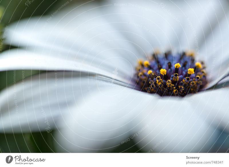 Sanft Natur blau schön grün weiß Pflanze Blume ruhig gelb Frühling Blüte klein elegant ästhetisch Blühend zart