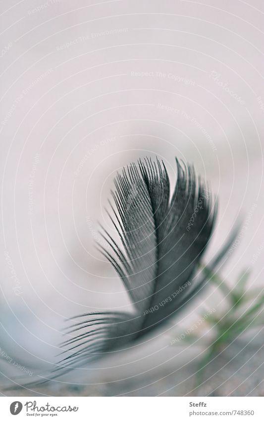 schwerelos und federleicht Vogelfeder Feder Leichtigkeit schwarz zerzaust luftig filigran hauchzart samtig flaumweich fein gewichtslos natürlich Federn anders