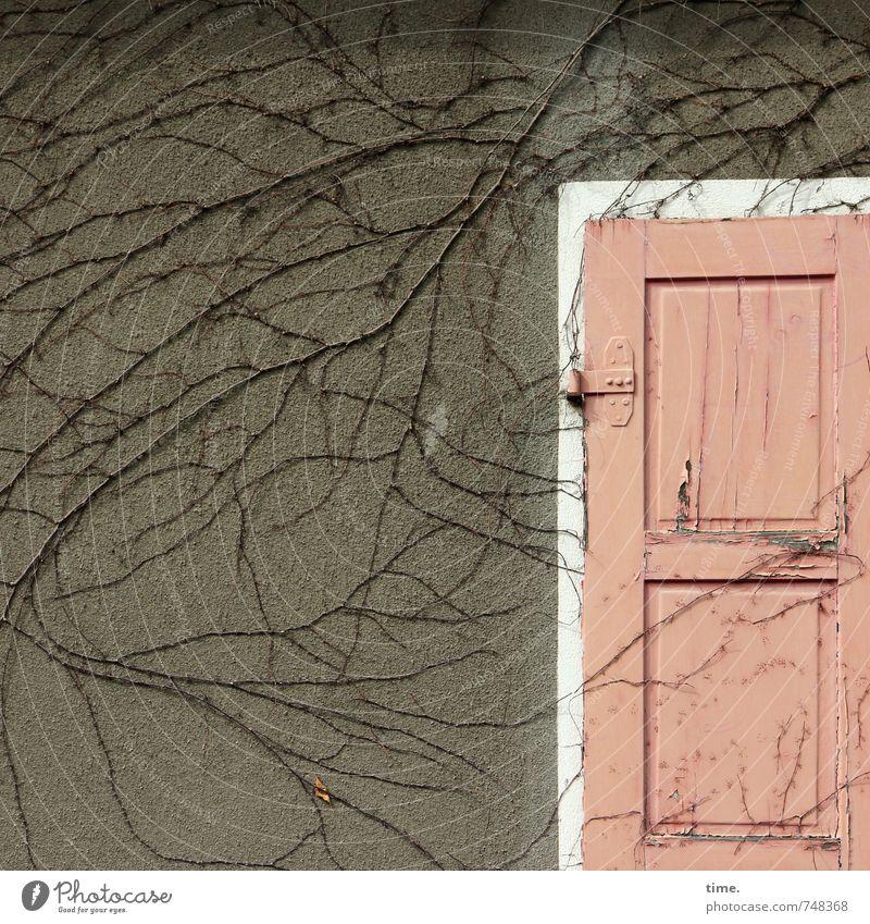Natur in der Stadt Wildpflanze Wein Kletterpflanzen Mauer Wand Fassade Fensterladen Scharnier Stein Beton Holz alt Nostalgie bewachsen Farbfoto Menschenleer