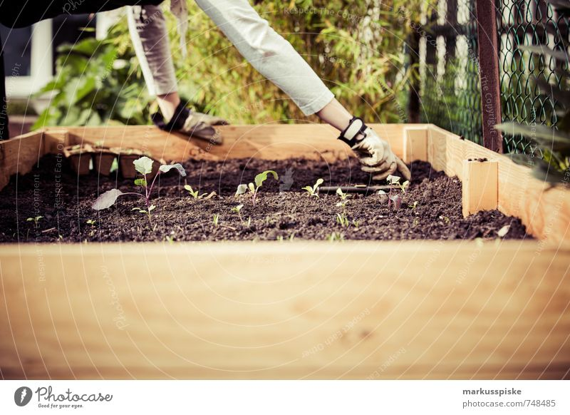 Pflanzzeit - Urban Gardening Mensch Jugendliche Pflanze Junge Frau Hand 18-30 Jahre Erwachsene Gesunde Ernährung feminin Garten Lebensmittel Freizeit & Hobby