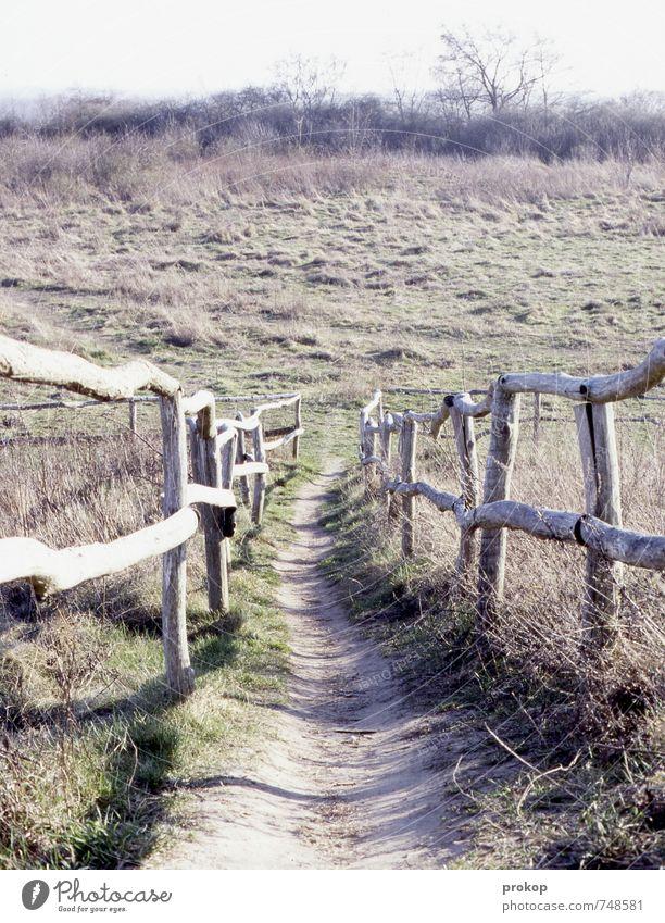 tricker. Umwelt Natur Landschaft Pflanze Himmel Horizont Frühling Sommer Schönes Wetter Baum Gras Park Wiese Feld authentisch einfach Ferne Gesundheit