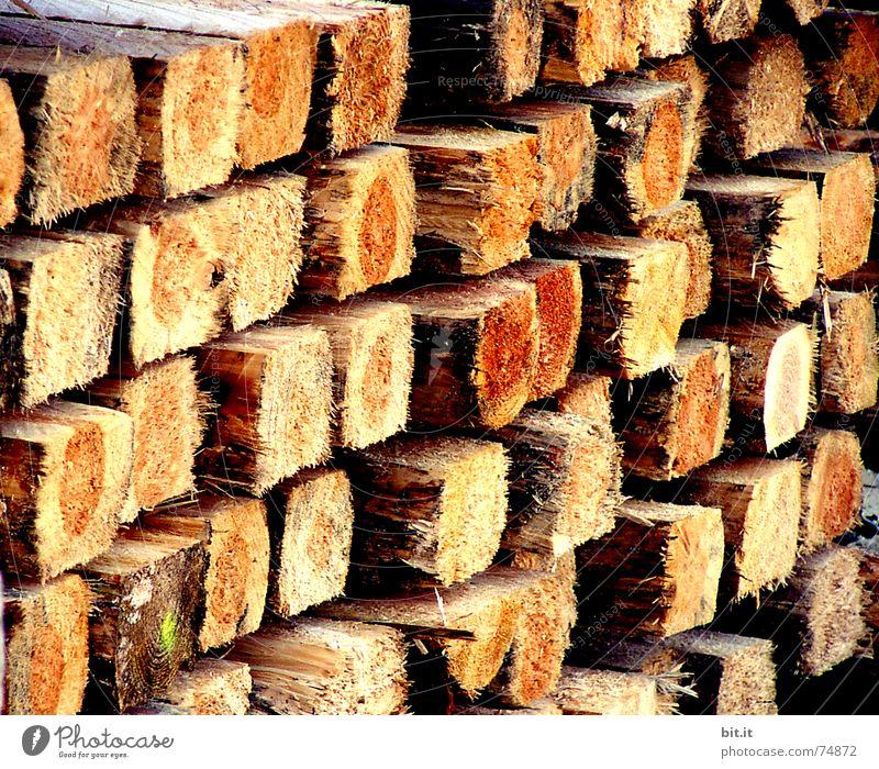 HOCHstapler Baum Winter Umwelt Wärme Herbst Holz braun Energie Baustelle Feuer Jahreszeiten Material Handwerk Tanne eckig Stapel