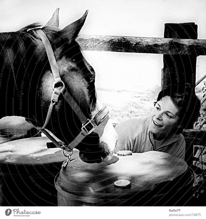 Gesucht und gefunden Pferd Frau Spielen ducken Fass üben Wachsamkeit Zuneigung hören verstecken Versteck zuwendung Filmindustrie Menschengruppe lassie fury