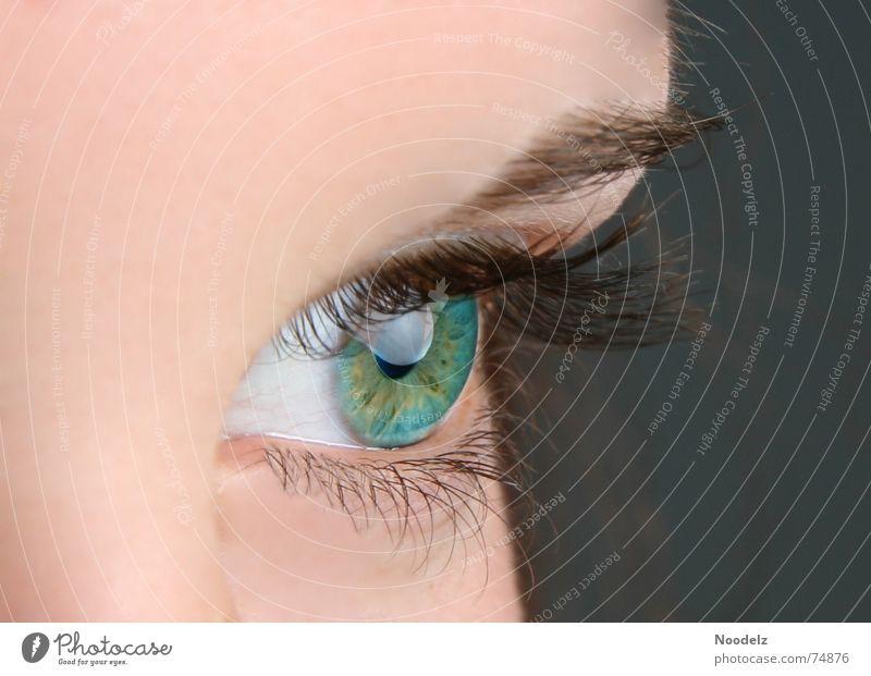 Green Eyes Mensch blau grün Gesicht Auge Haut Wimpern Augenbraue