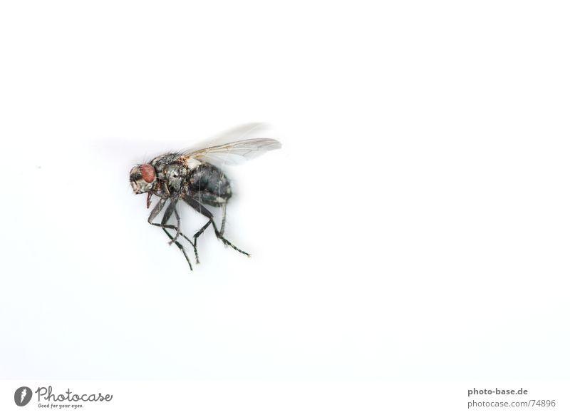 The - Fly Insekt Fliege fly Flügel Nahaufnahme Makroaufnahme fliegen flugschule