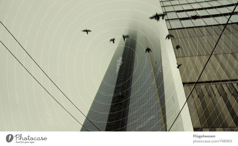 aufgescheucht II Ferien & Urlaub & Reisen Tourismus Ausflug Sightseeing Unwetter Wind Nebel Regen Tier Vogel Taube fliegen Panik Hochhaus Hochhausfassade