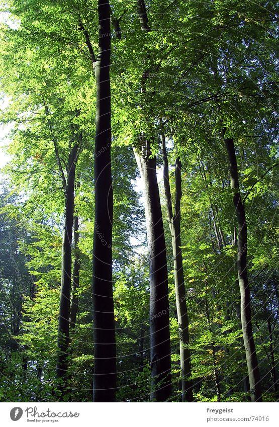 Harmony Part 1 Wald Baum grün Natur harmonisch Holzmehl Herbst forrest Sonne sun Beleuchtung tree trees Idylle Spaziergang natural waldaufnahme harmony woods