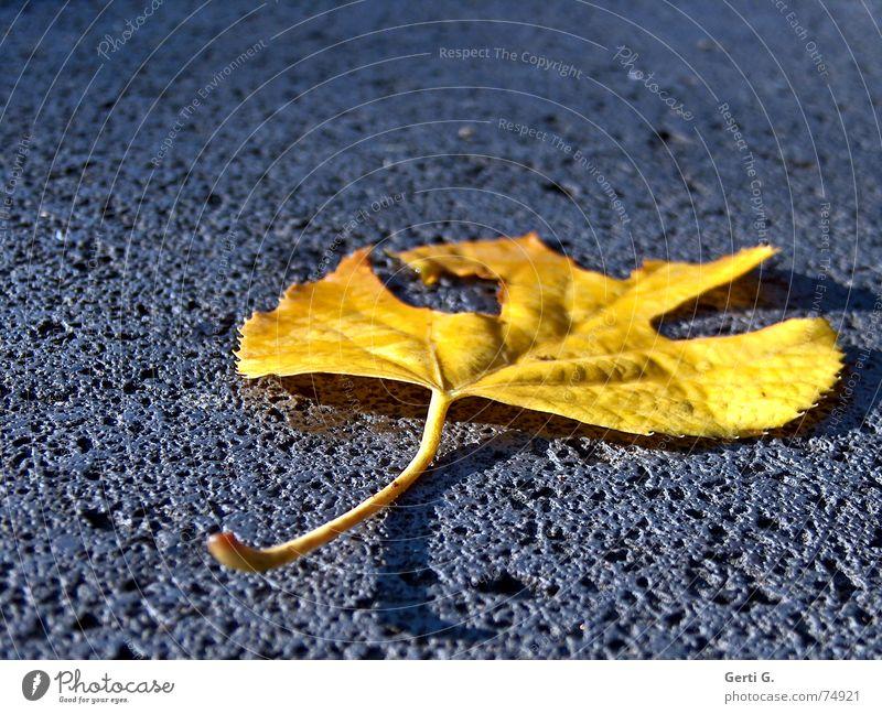 if you leaf me now Loch Blatt verfallen welk kaputt Herbst Sturz Absturz liegen flach Blues Einsamkeit gelb Herbstfärbung Jahreszeiten Baum Müll Stein löchern