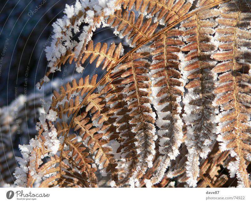 Eiskristalle auf Pflanze Winter kalt Schnee gefroren
