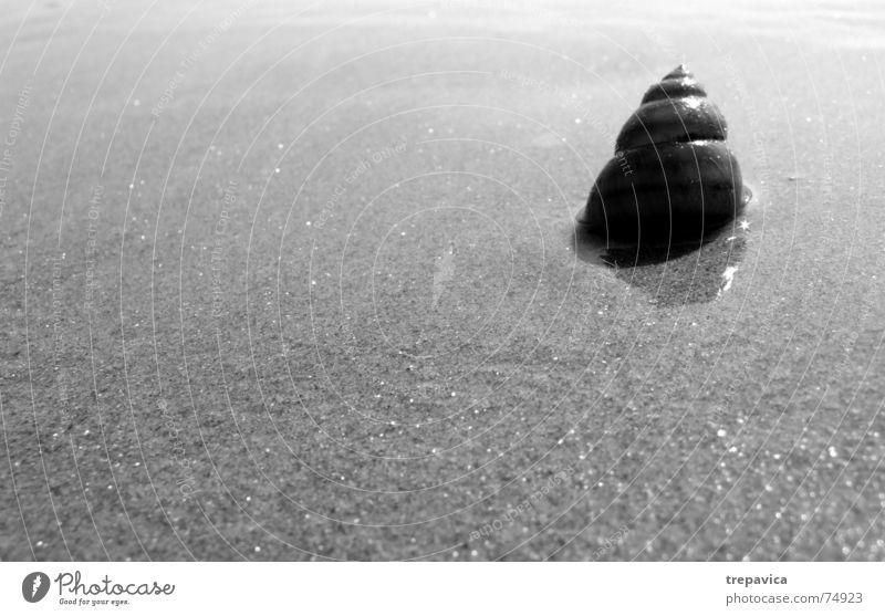 schnecke Natur Strand Haus Einsamkeit Tier Sand Schneckenhaus