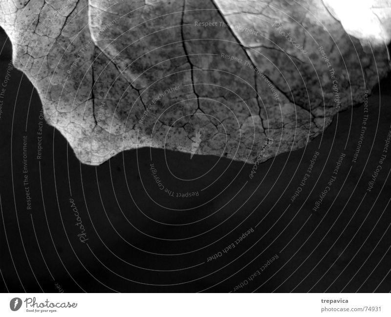 blatt trocken Pflanze Herbst Makroaufnahme Hälfte Schwarzweißfoto Strukturen & Formen Vor dunklem Hintergrund Natur