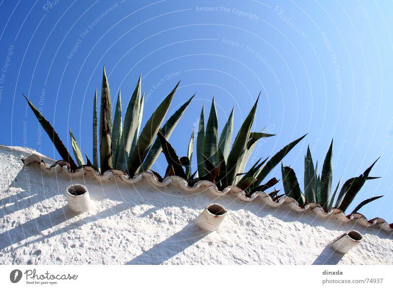azuro Himmel blau Sommer Mauer Kaktus Süden Mittelmeer Agave