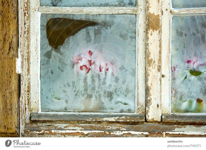 Frühblüher alexandrowka Park Potsdam preussen Schloss Sanssouci Burg oder Schloss Schnee wallroth Winter kalt Eis Tulpe Eisblumen Fenster Glas Fensterscheibe
