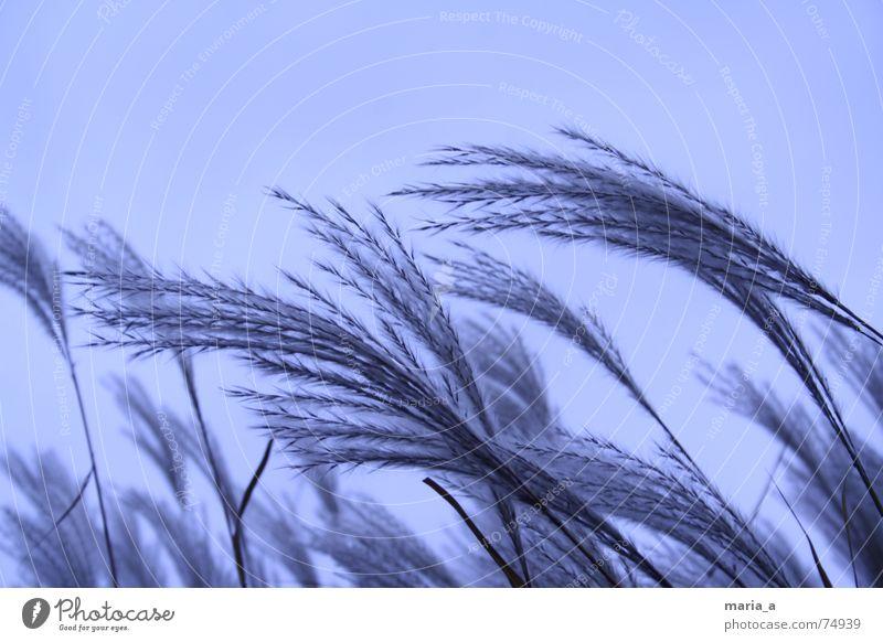 winterstimmung blau Pflanze Winter dunkel kalt Wind weich frieren Teich unheimlich Echte Farne