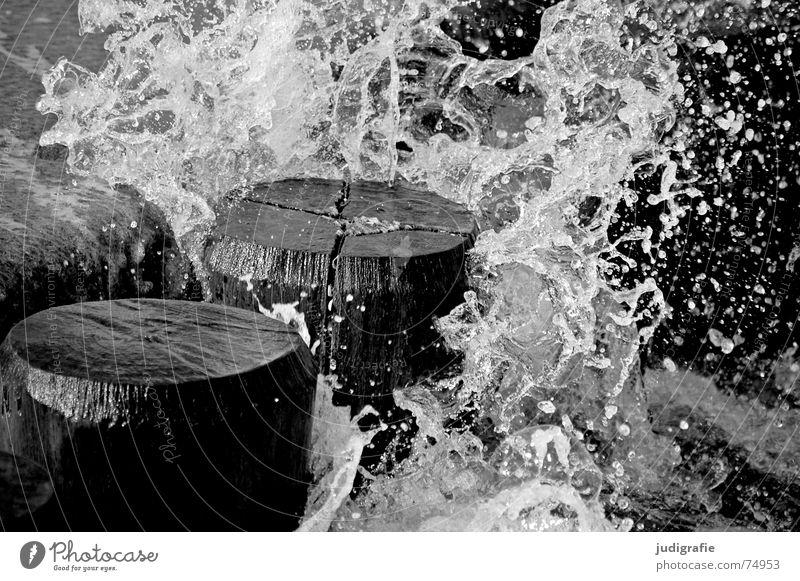 Gischt Natur Meer Ferien & Urlaub & Reisen schwarz Holz See Feste & Feiern Wellen Küste Wassertropfen nass frisch Wildtier Ostsee spritzen Erfrischung