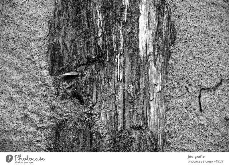 Sand und Holz Erosion Strand Baum Meer Naturgewalt Fischland-Darß-Zingst Weststrand anlandung Baumstamm Tod Leben Strukturen & Formen