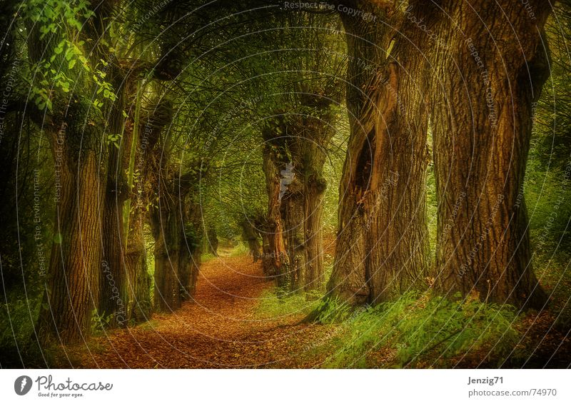In the woods. Baum Blatt Wald Herbst Wege & Pfade Fußweg Allee Holzmehl