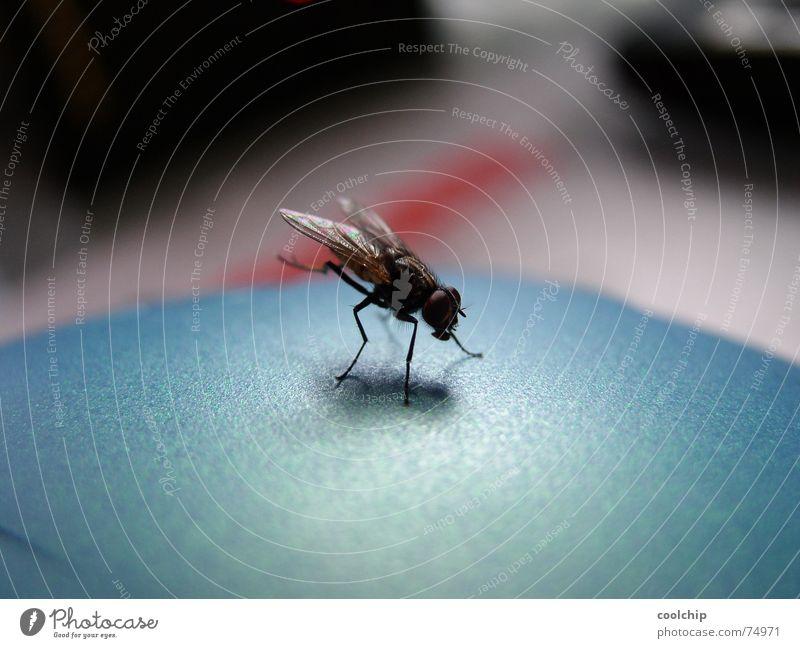 Fliegenhandstand Fliege nah Insekt Reinigen Turnen Artist Handstand Kopfstand