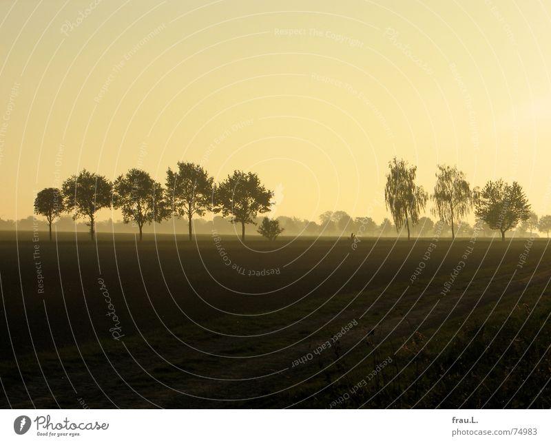 Herbstlicht Degersen Himmel Natur Sonne Baum Landschaft Straße Wege & Pfade Horizont Feld Nebel gold Sträucher Spaziergang Dorf Niedersachsen