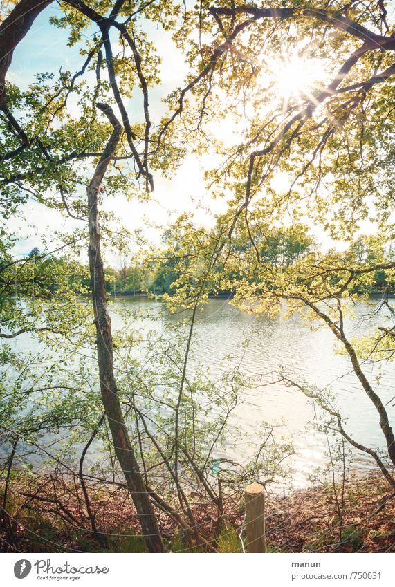 so mag ich das Ferien & Urlaub & Reisen Ausflug Umwelt Natur Landschaft Wasser Sonne Frühling Sommer Schönes Wetter Baum Sträucher Wildpflanze Wald Seeufer