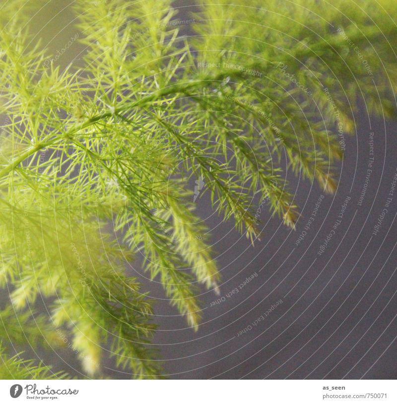 Asparargus Natur grün Farbe Pflanze Sommer Erholung ruhig Blatt schwarz Umwelt Frühling Garten Wachstum Klima ästhetisch Beginn