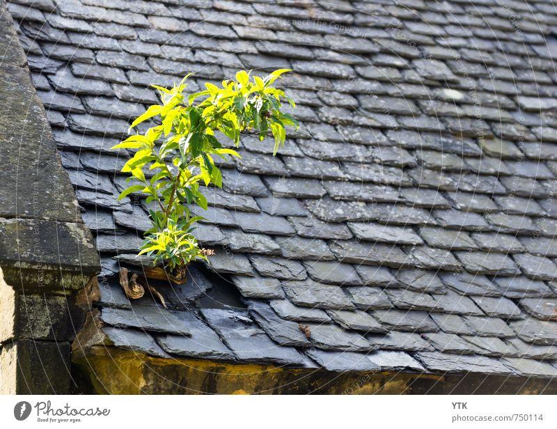 I want to break free Umwelt Natur Pflanze Baum Gras Sträucher Blatt Grünpflanze Wildpflanze Stadt Stadtrand Haus Ruine Bauwerk Gebäude Architektur Fassade Dach