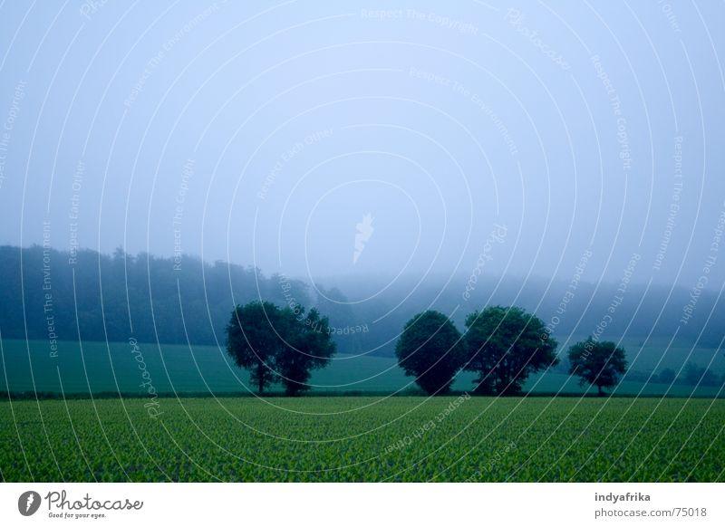 morgenstimmung Nebel wach Stimmung ruhig Mitte Zen Außenaufnahme nebel morgen stimmung Morgen ich sein