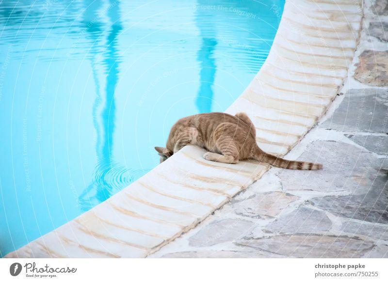 Ich nehm dann nur ein kleines Wasser trinken Trinkwasser Ferien & Urlaub & Reisen Sommer Sommerurlaub Tier Haustier Katze 1 krabbeln sitzen niedlich Angst