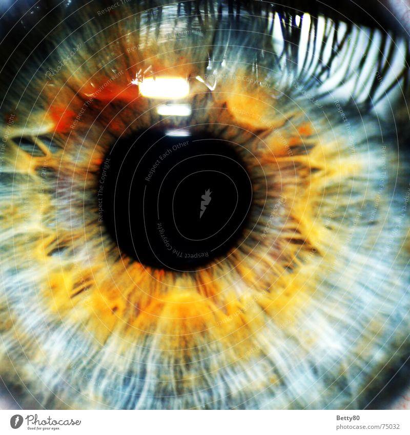Guck ma' Mensch maskulin feminin Frau Erwachsene Mann Auge glänzend Blick mehrfarbig Pupille Regenbogenhaut Wimpern Farbfoto Nahaufnahme Detailaufnahme