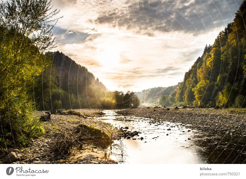 Wildwasserfluss im goldenen Abendlicht Fluss Wasser Sonnenlicht Natur Stille Erholung Bach Wildbach Bachbett Landschaft Gegenlicht