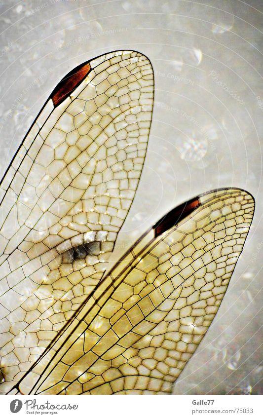Elfenflügel Libelle Insekt Flügel Märchen Fantasygeschichte Mosaik Tiffanylampe fliegen Strukturen & Formen Makroaufnahme Selbstständigkeit