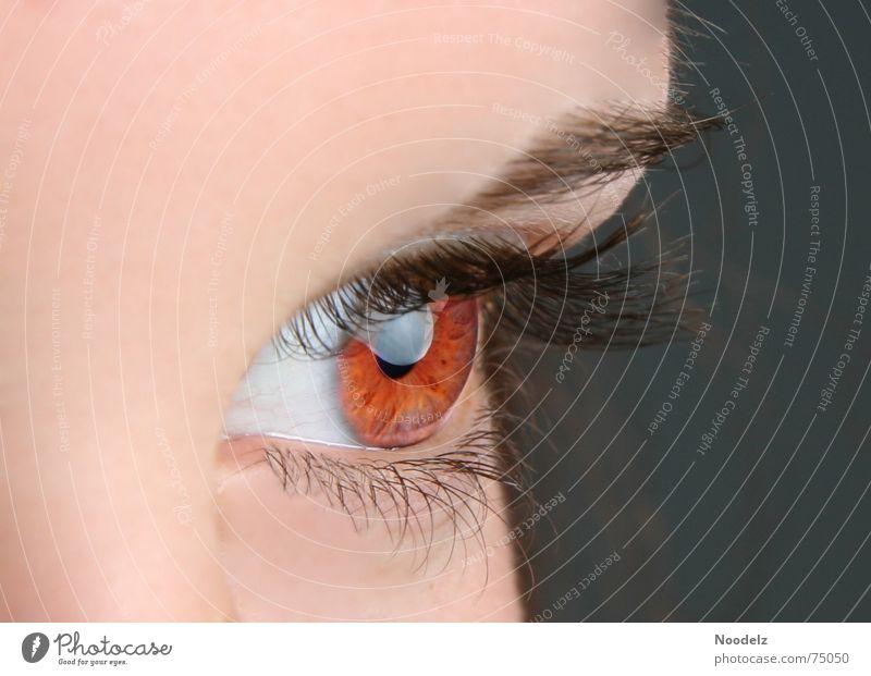 Red Eye Frau Mensch Auge Wimpern Augenbraue Regenbogenhaut Augenfarbe