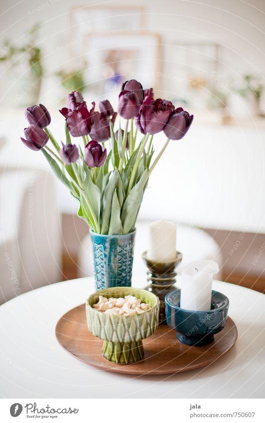 tulpen Häusliches Leben Wohnung Dekoration & Verzierung Tisch Vase Kerze Steingut Pflanze Blume Tulpe Blatt Blüte ästhetisch Freundlichkeit Fröhlichkeit hell
