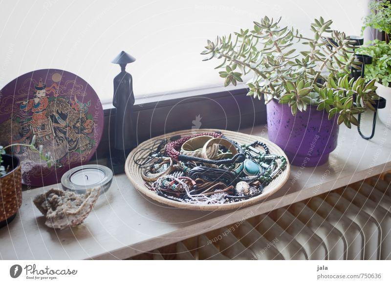 fensterbank Häusliches Leben Wohnung Dekoration & Verzierung Pflanze Grünpflanze Topfpflanze Sukkulenten Schmuck ästhetisch Farbfoto Innenaufnahme Menschenleer