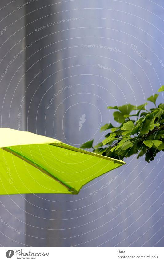 Ginkgo am Sonnenschirm Pflanze Baum Blatt Haus Beton Linie Netzwerk Erholung Regenschirm Farbfoto Außenaufnahme Menschenleer Textfreiraum oben