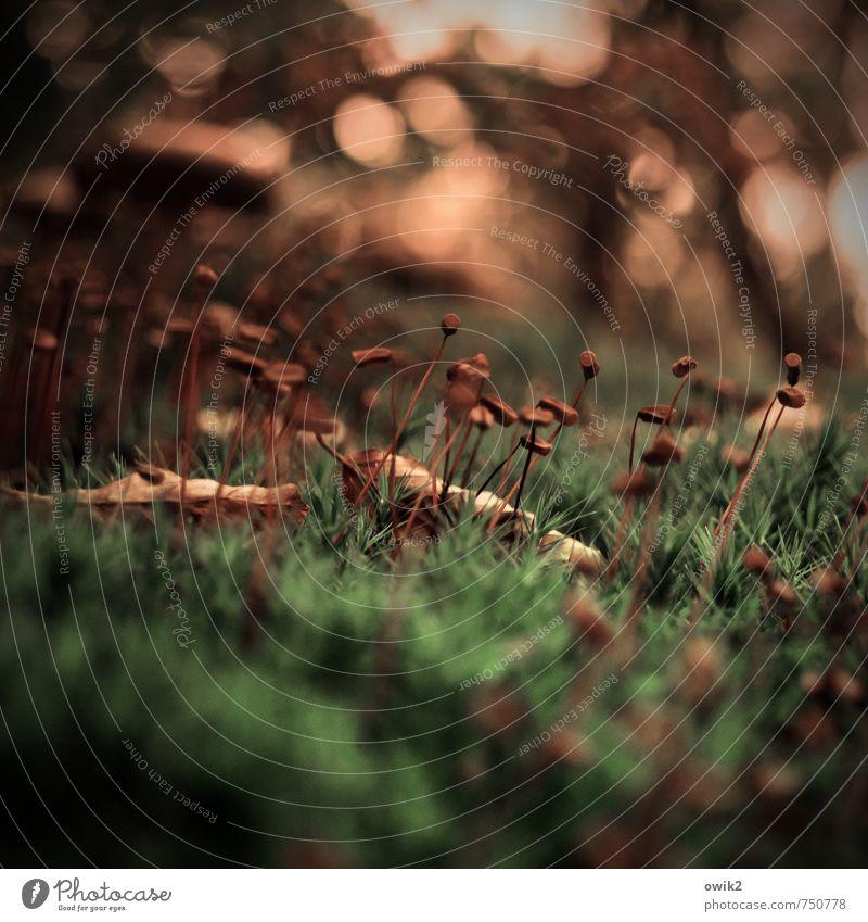 Andrang Umwelt Natur Landschaft Pflanze Herbst Schönes Wetter Baum Moos Wildpflanze Wald Bewegung klein nah natürlich Neugier unten viele Waldboden winzig