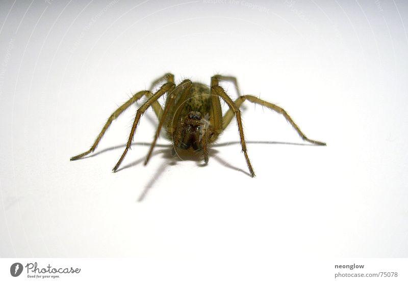 unrasierte Beine Spinne krabbeln Ekel Angst gruselig jagtspinne Auge Haare & Frisuren