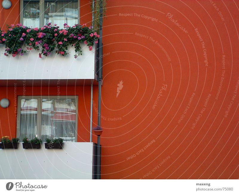 Roter Ausblick Balkon rot Haus Fenster Blume Fassade 2 Pflanze