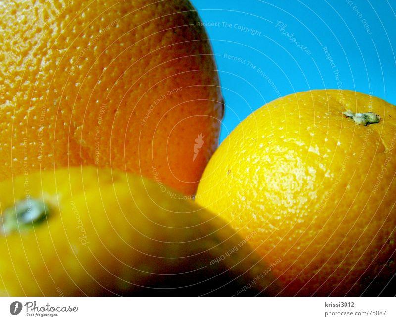 orangefruits blau Sommer Ernährung Lebensmittel Gesundheit Frucht Orange süß Gastronomie Wut türkis Stillleben Vitamin Karibisches Meer maritim herb