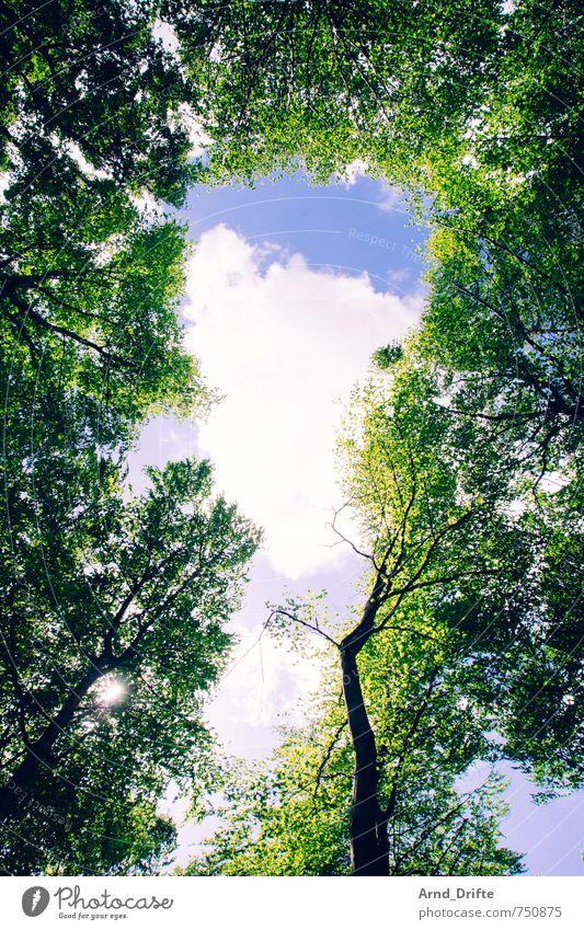 Wald Himmel Natur Sommer Baum Landschaft Wolken Frühling klein wild