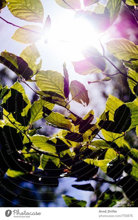 Sonne Blätter Ausflug Berufsausbildung Natur Landschaft Pflanze Himmel Sonnenlicht Frühling Schönes Wetter Baum Blatt Wald hell natürlich grün Ast Farbfoto