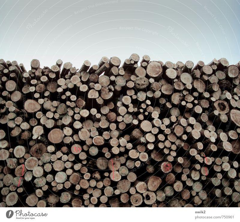 Verlorene Stämme Holz liegen groß hoch viele geduldig Kraft Zusammenhalt Baumstamm Stapel aufeinander Schilder & Markierungen rund geschnitten Schnittholz
