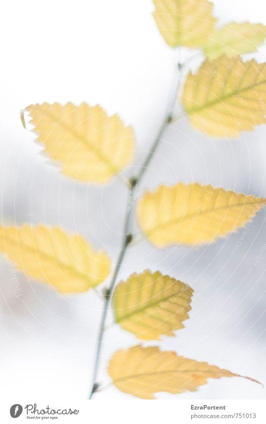 Absicht Natur schön weiß Pflanze Baum Blatt Wald gelb Umwelt Herbst grau hell Garten Wetter Klima ästhetisch