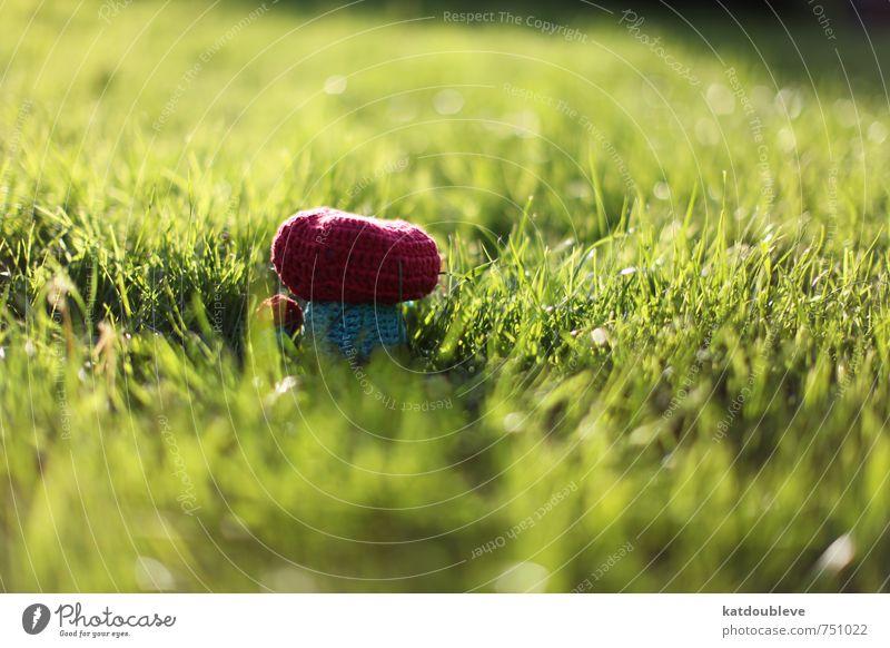 ma création Natur Pflanze Landschaft Umwelt Wiese Gras Spielen Garten Kunst Wetter Idylle Wachstum Klima Idee Wandel & Veränderung einzigartig