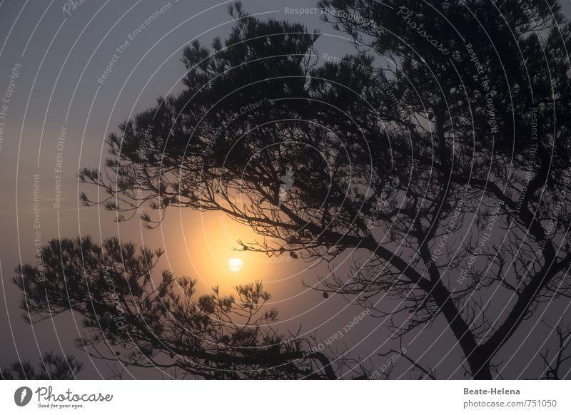 Peace | Täglicher Neuanfang Himmel Natur blau Sommer Sonne Baum Erholung Landschaft ruhig schwarz gelb Leben Gefühle grau Glück träumen