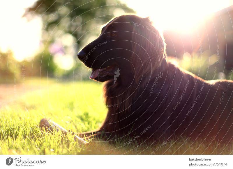 chien Hund Natur schön Pflanze Sommer Tier Leben Frühling Sport Spielen natürlich braun Garten Freundschaft Freizeit & Hobby Wetter
