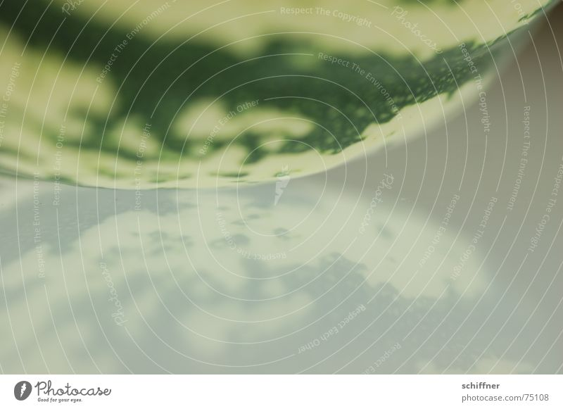Kürbis1 grün Hintergrundbild Erde Spiegel