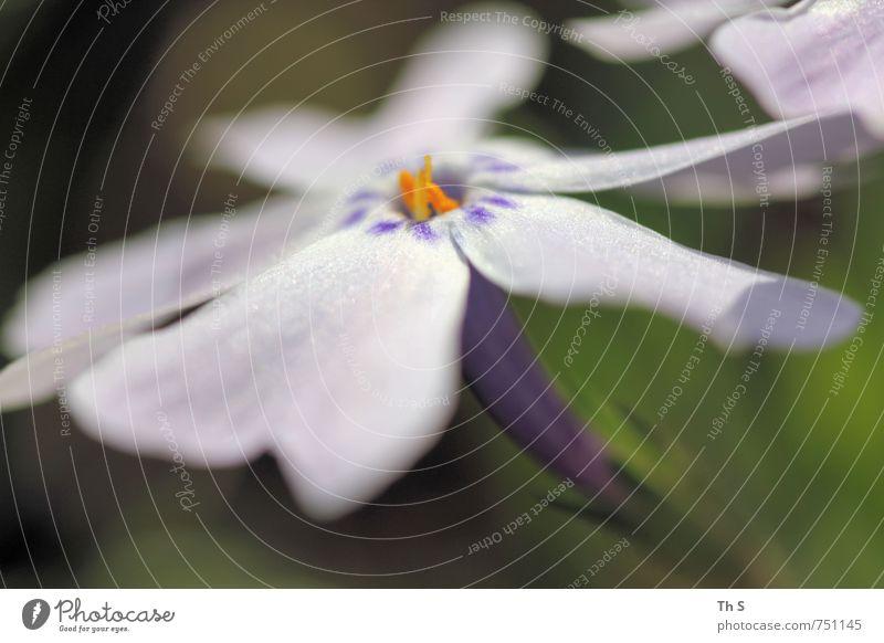 Fühling Natur Pflanze Frühling Sommer Blüte Blühend Duft ästhetisch elegant frisch natürlich schön Frühlingsgefühle Umwelt harmonisch Farbe Romantik träumen